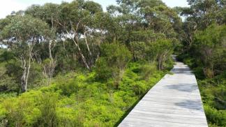 Forest Trail, Wollongong NSW Australia