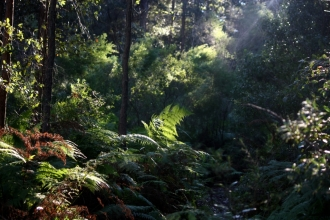 Hiking at Brokers Nose forest, Wollongong NSW Australia.