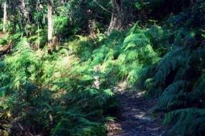 Lush greenery on the Mt Keira Ring Track