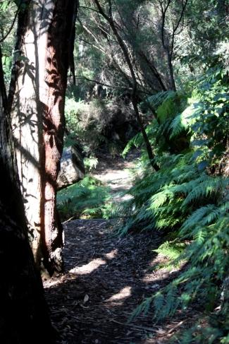 Mt Keira trails
