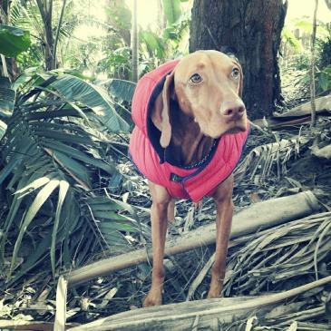 Dog Bushwalkers