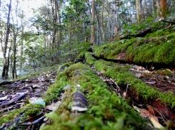 Mossy fallen logs