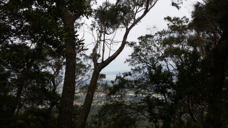 Enjoy the walk to the summit and take in glimpses of views to Lake Illawarra and the coastline.