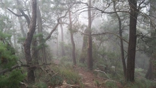 Something everyone should try; walking through the clouds on a beautiful Mt Kembla trail.
