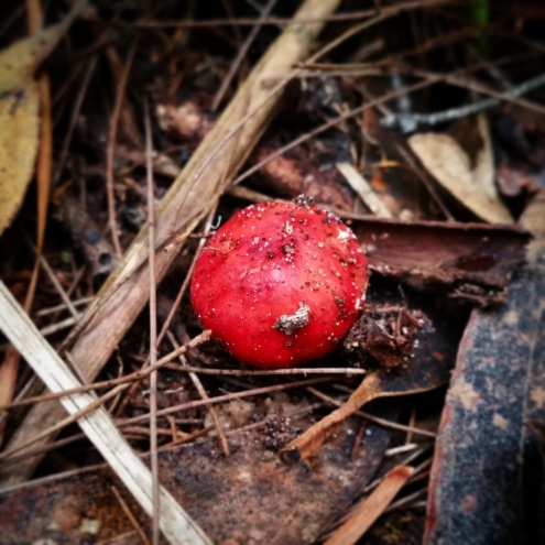 Cute button red mushroom