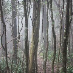 Eerie forest walks - Mt Kembla