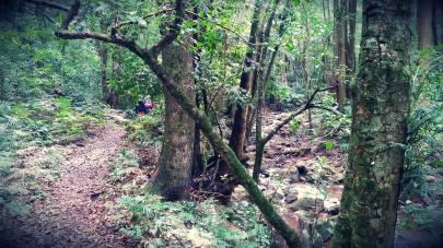 Cascades Trail, Macquarie Pass National Park in the Illawarra region