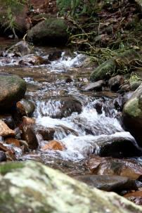 Cascades Trail, Macquarie Pass National Park, Illawarra Region