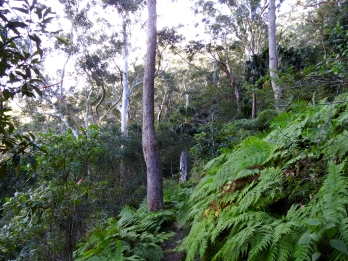 Fern covered paths, Stanwell Park, Illawarra, New South Wales