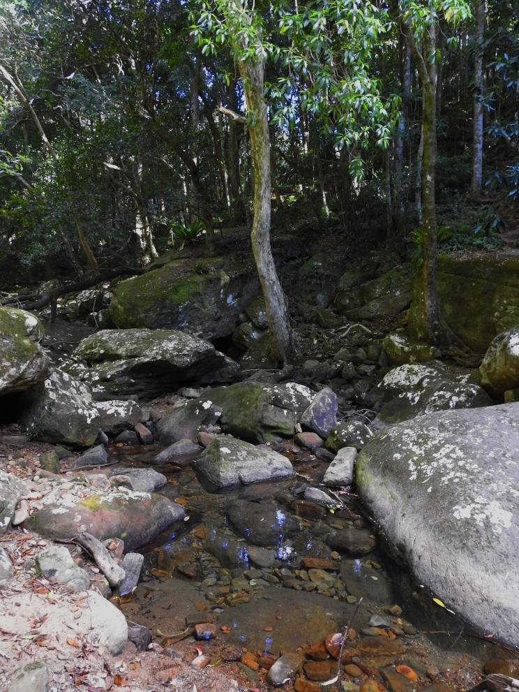 Stanwell Creek, Stanwell Park, Illawarra, New South Wales - Wodi Wodi trail.