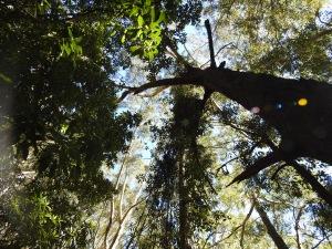 Tree views, Wodi Wodi trail. Illawarra, New South Wales