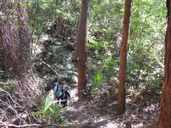 Steep hill climbs, Wodi Wodi trail. Stanwell Park.