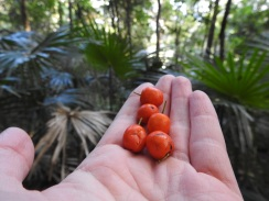 Rainforest fruits