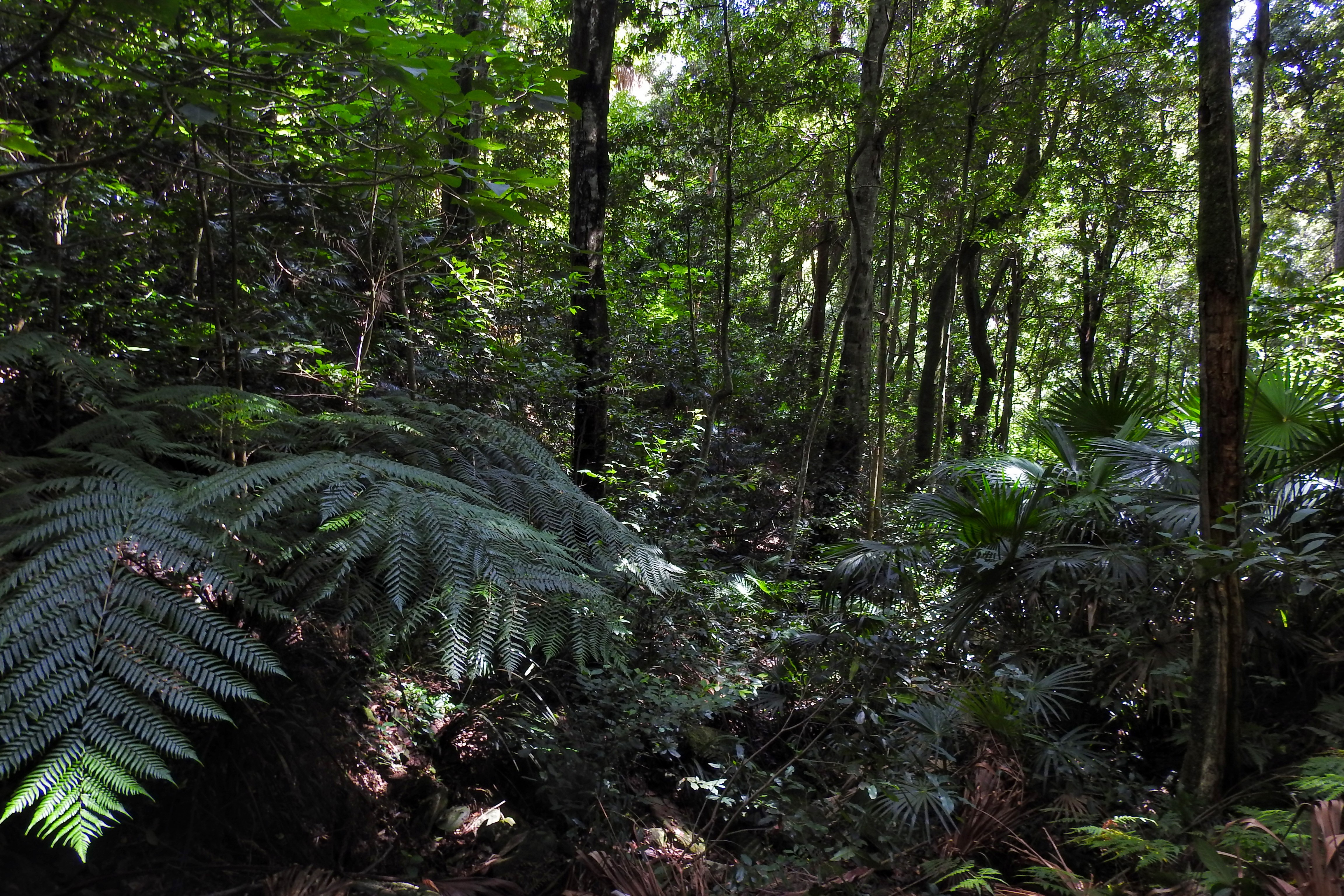 Lush forests on Mt Keira Ring Trail